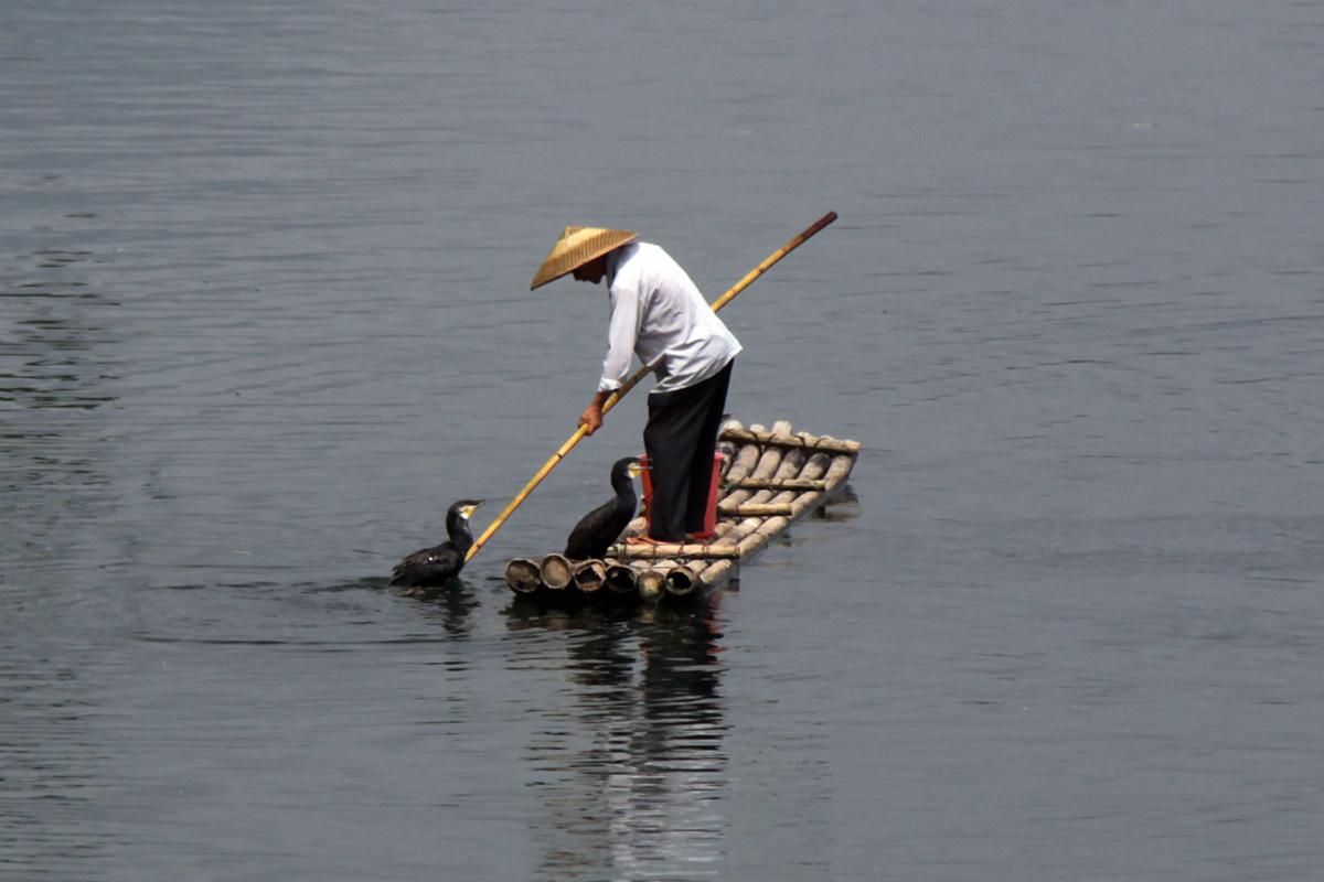cormorant-fishing-in-yangshuo-1