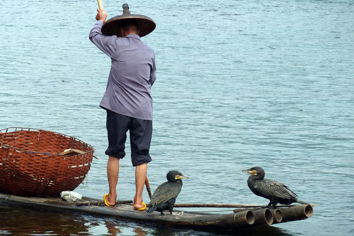 cormorant-fishing-in-yangshuo-2