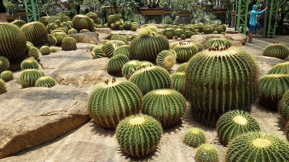 Nong---Cactus-garden